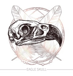 Eagle Skull Hand Drawn vector image vector image