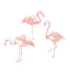 hand drawn flamingoes vector image vector image