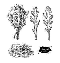 arugula leaf hand drawn set vector image vector image