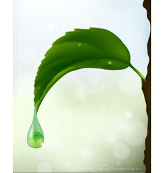 Green leaf with a drop flowing vector