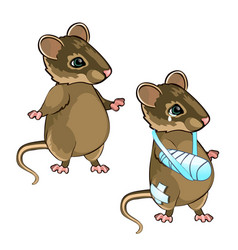healthy and diseased mouse isolated on white vector image