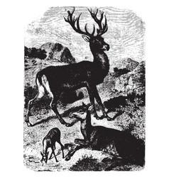 Herd of deer vintage vector