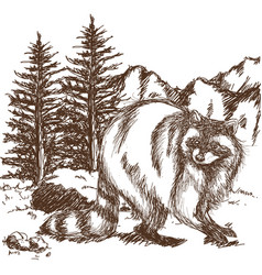 Raccoon sketch hand drawing of wildlife vector