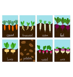 Roots vegetables garden growing cards vector