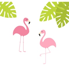 Two pink flamingo set Exotic tropical bird Zoo vector