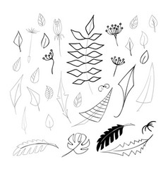 set of 32 hand drawn elements leaves vector image vector image