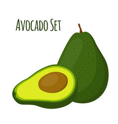 avocado whole and slice tropical summer fruit vector image