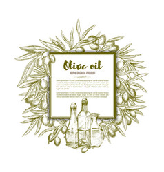 Olive oil sketch poster vector