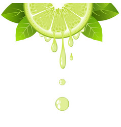 realistic lime slice with juice drops juicy fruit vector image