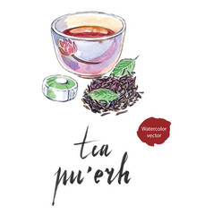 ripe chinese puerh tea vector image