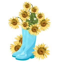 sunflower bouquet in blue boots summer vector image