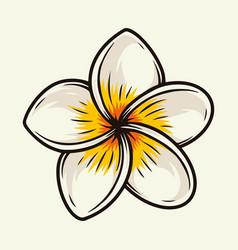 Colorful plumeria tropical flower vector