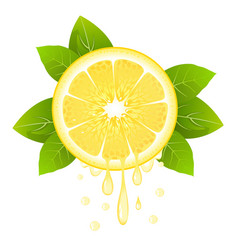 lemon slice with juice drops juicy citrus fruit vector image