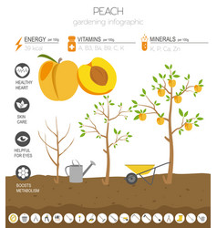 peach beneficial features graphic template vector image