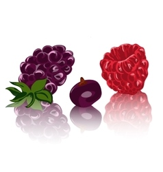 berries isolated on white backgraund vector image