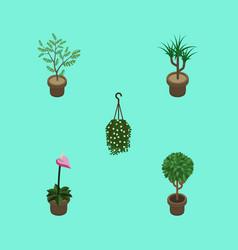 Isometric houseplant set of houseplant blossom vector