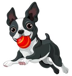 Boston Terrier Holds Ball vector image