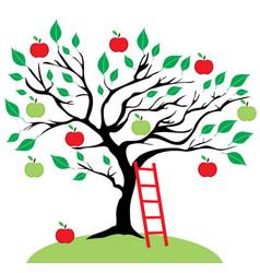 apple tree ladder vector image
