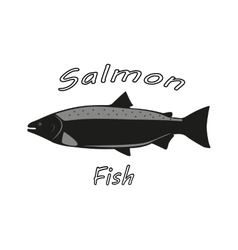 a salmon fish vector image