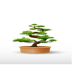 bonsai plant in pot vector image