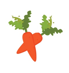 carrots vector image
