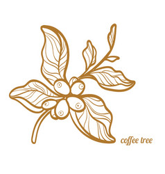 Coffee branch symbol vector