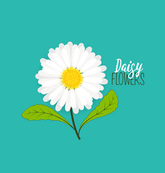 Meadow floral background vector