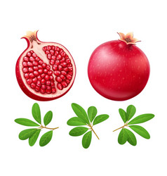 set of ripe juicy pomegranate vector image
