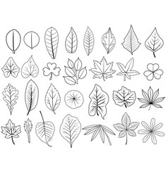 line leaves vector image