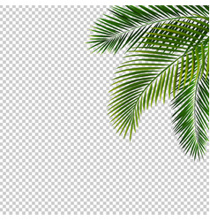 border with palm leaf isolated transparent vector image