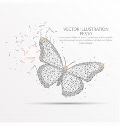 butterfly low poly wire frame on white background vector image