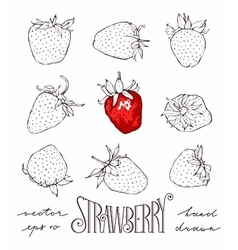 Set of strawberries vector