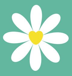white chamomile daisy icon cute flower plant vector image