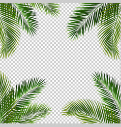Frame with palm leaf isolated transparent vector