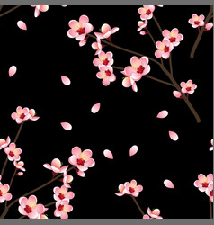 Prunus persica - peach flower blossom on black vector