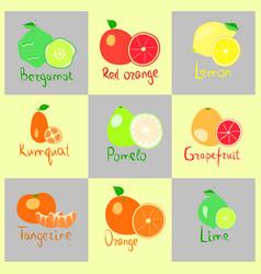 Set of citrus fruits vector