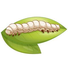 Silkworm vector