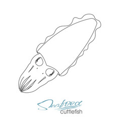 Squid seafood isolated sketch sea animal vector