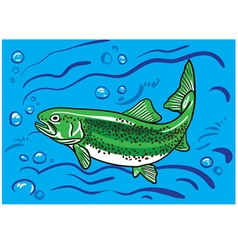 Trout fish in the water vector
