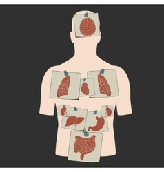 internal organs stickers set vector image vector image