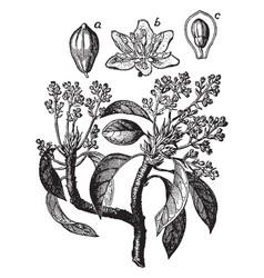 avocado vintage vector image