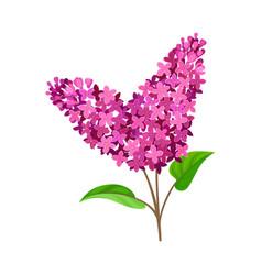 Bright purple lilac on a vector