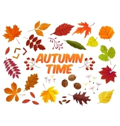 Color autumn leaves on white background Fall leaf vector