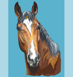 colorful horse portrait-5 vector image