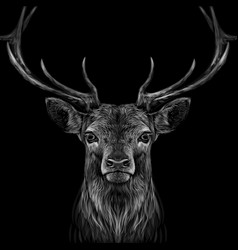 deer graphic hand-drawn portrait a vector image