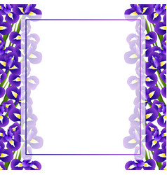 iris flower banner card border vector image