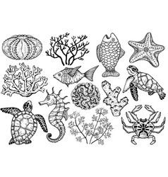 sketch sea shells fish corals and turtle vector image