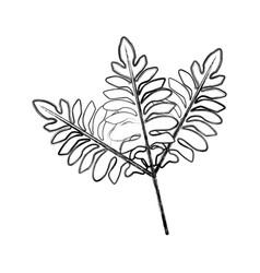 Branch leaves plant tree natural botanical image vector