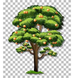 Orange tree on transparent background vector