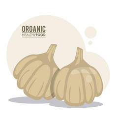 Organic healthy food garlic vector